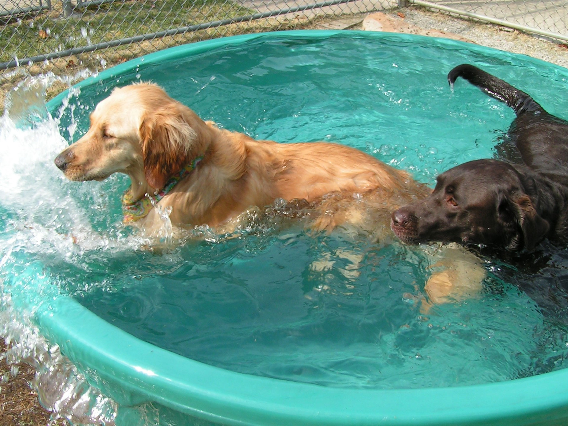 Dogs in water tub